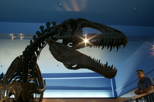 The Museum of the Red River in Idabel displays the reconstructed skeleton of a dinosaur, Acrocanthosaurus atokensis, discovered only 12 miles from the museum.