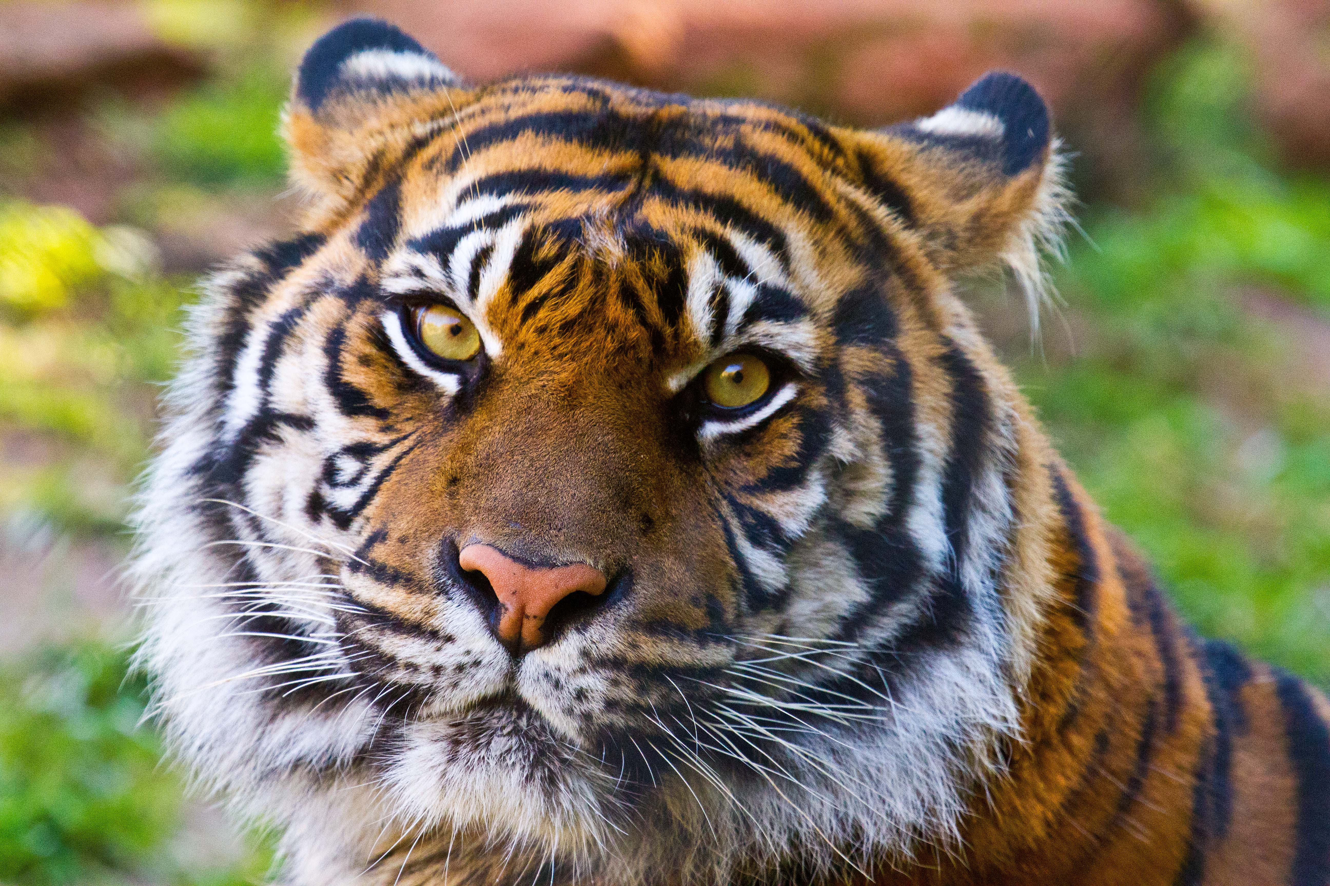 Oklahoma City Zoo Amp Botanical Garden Travelok Com