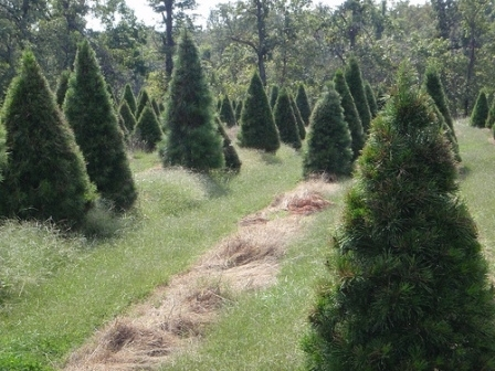 Valley Green Christmas Trees Radford Va | baiza.boxip.net
