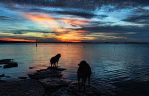 Lucky dogs enjoy a colorful sunset scene while walking with their owner along the shores of Lake Eufaula.