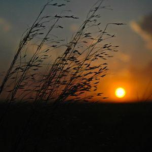 An Oklahoma sunset shines through the tall grasses in northwestern Oklahoma near Kenton.