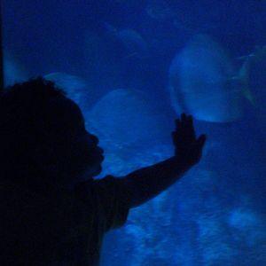 A child enchanted by the aquarium at the Oklahoma City Zoo.