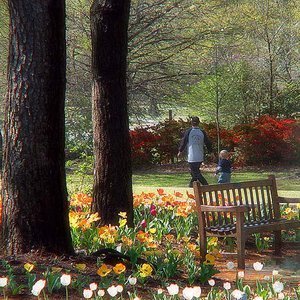 A walk in the park is an exquisite treat during the annual Azalea Festival in Muskogee.