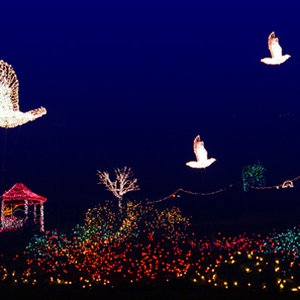 Muskogee's Honor Heights Park comes alive with color during the annual Garden of Lights Festival held in the park.