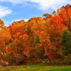 Fall colors at their peak along Spavinaw Creek in Spavinaw.