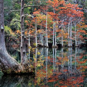 Cypress trees displaying fall foliage brighten the Mountain Fork River at Beavers Bend State Park.