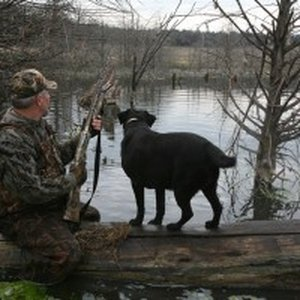 Bring your own dog along or use one of the experienced hunting dogs provided by Law Dawg Hunting Lodge in Cogar.