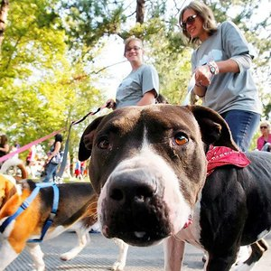 Dogs can socialize in a safe environment while getting their exercise at Paws Valley Dog Park.