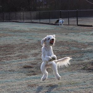 Your dog will jump for joy with a trip to Central Bark in McAlester.
