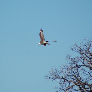 Look out for eagles in Catfish Bay Campground at Lake Texoma State Park.