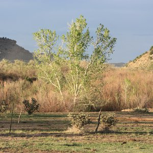 A tree thrives in the arid landscape of Black Mesa State Park.  Photo by Deby Snodgrass.
