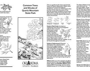 Common Tree & Shrub Guide