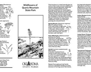 Native Wildflower Guide