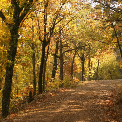 Autumn hiking in the Ouachita National Forest provides spectacular views of the fall foliage.
