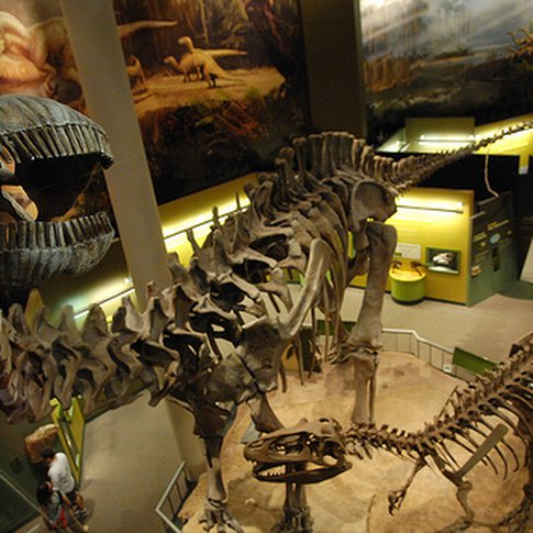 "At the Sam Noble Oklahoma Museum of Natural History, kids love to ride the ""Dinovator"" up to the second floor for a bird's eye view of the world's largest Apatosaurus."
