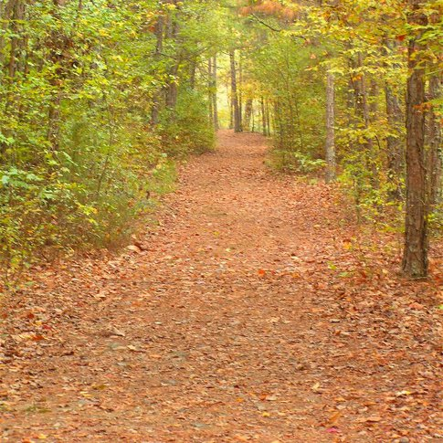 The Beaver Lodge Trail at Beavers Bend State Park takes hikers through a variety of scenic landscapes.  The park, located near Broken Bow in southeastern Oklahoma, offers a lodge and cabins, as well as both tent and RV campgrounds.