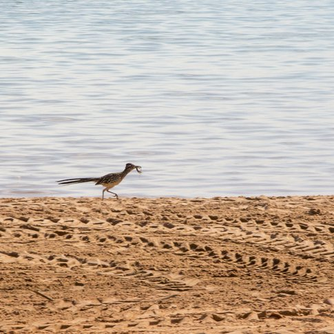 Foss State Park in Foss features unexpected wildlife treasures like watchable wildlife, including roadrunners.