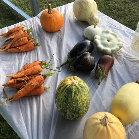 Discover fresh fruits and vegetables at the Woodward Farmers Market.