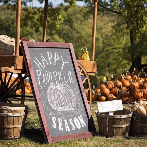 Pick the perfect pumpkin at Parkhurst Ranch & Pumpkin Patch in Arcadia.