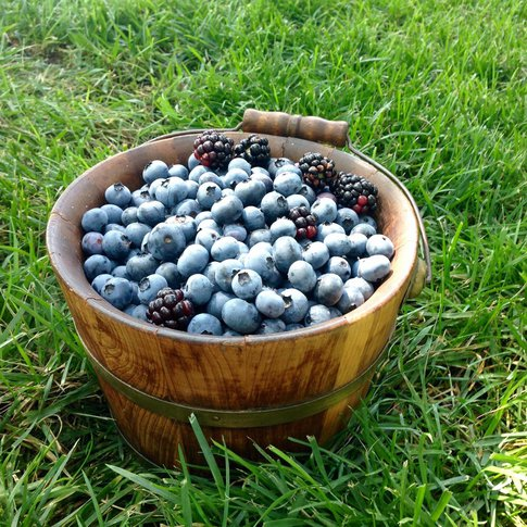 Visitors will find a diverse selection of berries at the scenic Endicott Farms in Mounds.