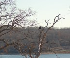 Winterization Notice at Lake Texoma State Park