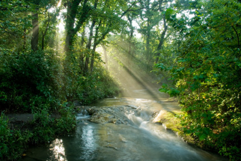 Sunlight streams through lush woods along a creek at Chickasaw National Recreation Area in Sulphur.