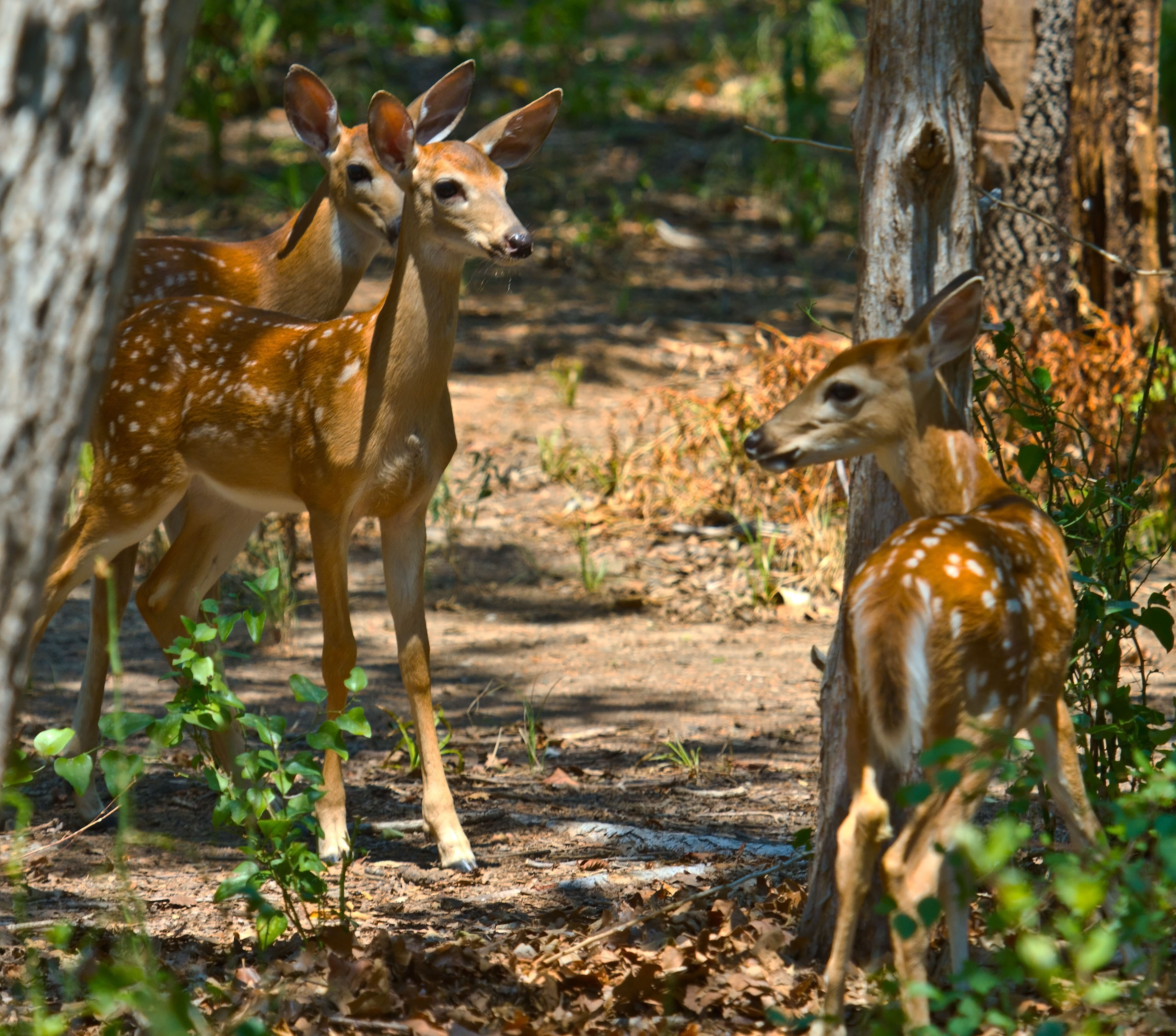 Visit Wichita Mountains Wildlife Refuge U0026 Visitoru0027s Center On Facebook