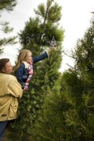 Start a new family tradition at Red Barn Christmas Tree Farm in McAlester, where visitors will find everything from beautiful pine trees to designer ribbons, ornaments and Christmas greenery.