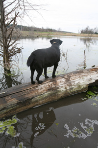 Oklahoma's 32 state parks welcome pets. Dogs seem to love the hiking, fishing, camping and wildlife watching as much as any other state park visitor.