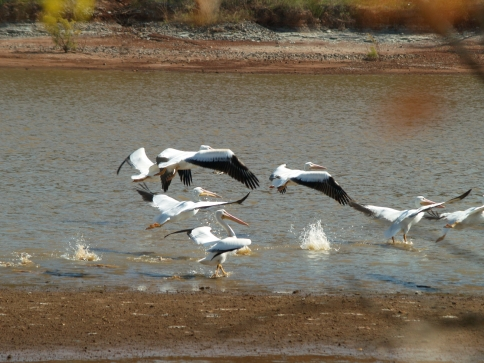 Great Salt Plains State Park in Jet features unexpected natural treasures like its saltwater lake.