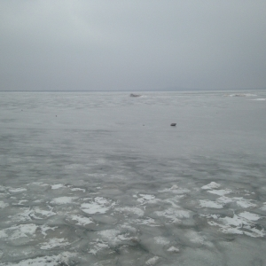 A sheet of ice covers Tom Steed Lake during the winter.